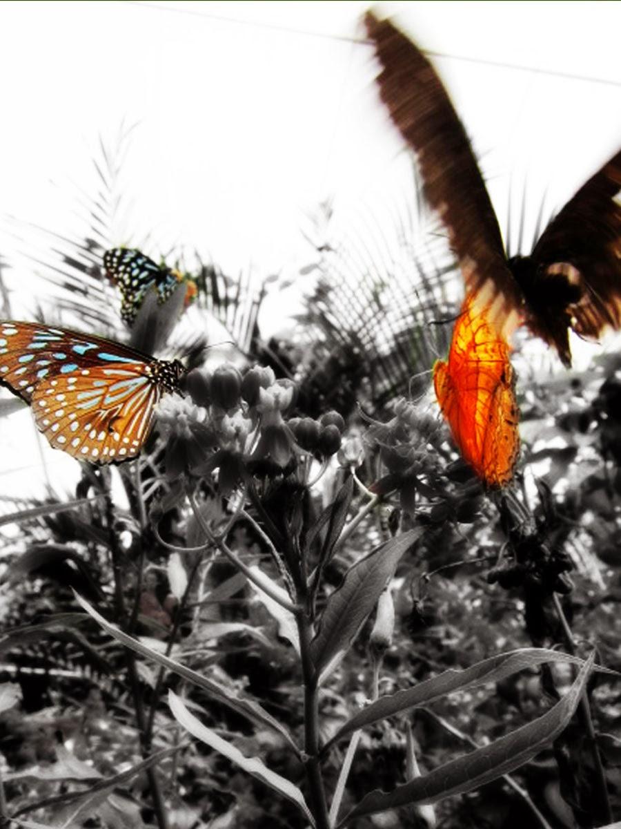 Cameron Highlands, Malaysia 2012