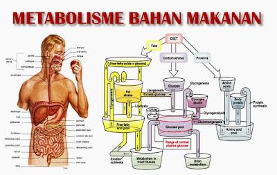 Bagaimana menjaga metabolisme tetap tinggi di usia paruh baya