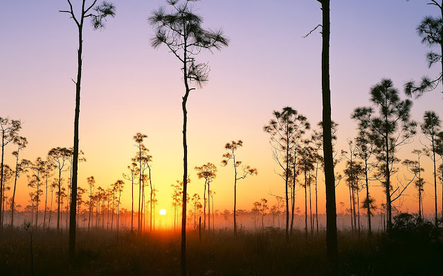 national park, florida national park, sunrise, pines