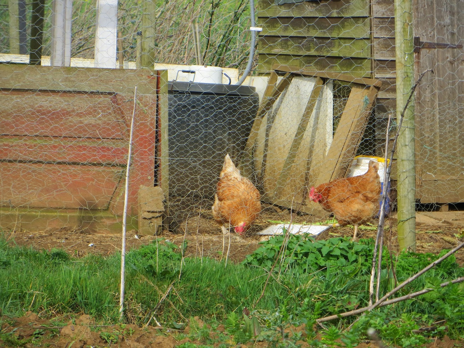 Lovely view of the chickens.
