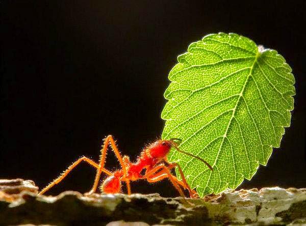 سبحان النمل الكذب وعقوبة الكذب mb09.jpg