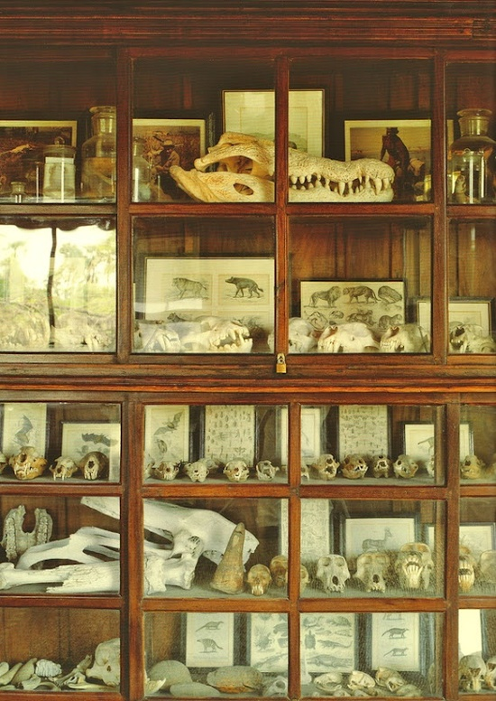 Cabinet Of Curiosities Lovinglivingsmall Blog Small Antique Cabinet Of
