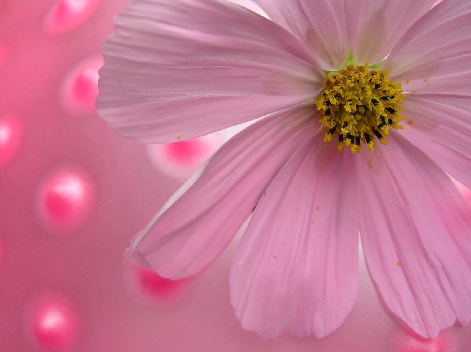 Poemas De Amor Flores