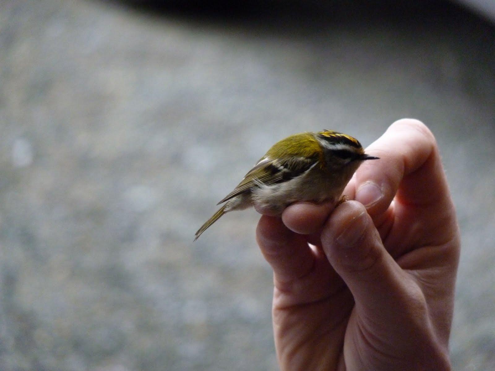 Le paradis est sur terre l 39 enfer aussi le plus petit for Un petit oiseau