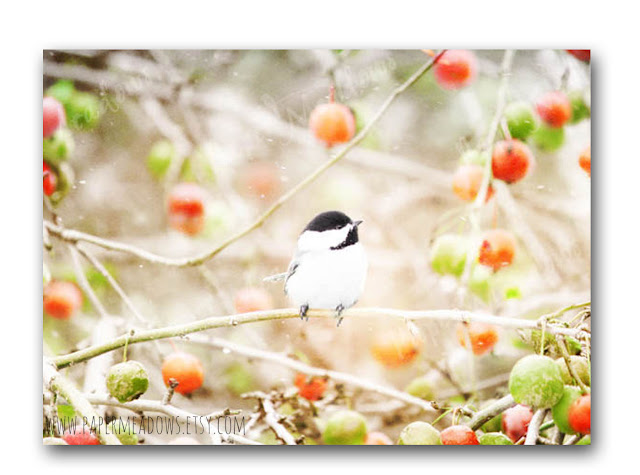 Whimsical Chickadee Christmas Photography Wall Decor. You can purchase and download our photography creations and instantly print at home from our Paper Meadows Photography Shop on ETSY. To Visit our shop now click here.