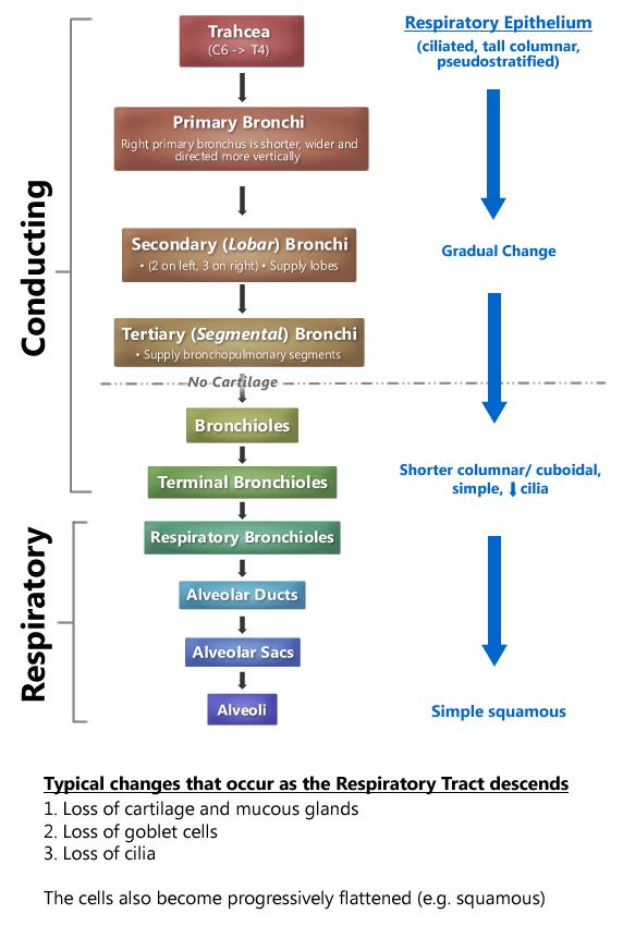 Respiratory practical block