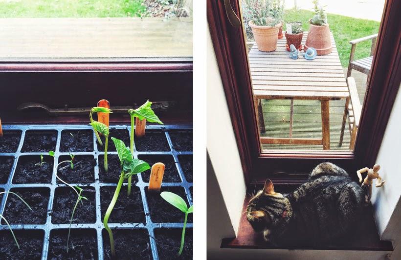 Our Window Sill Garden // Effie