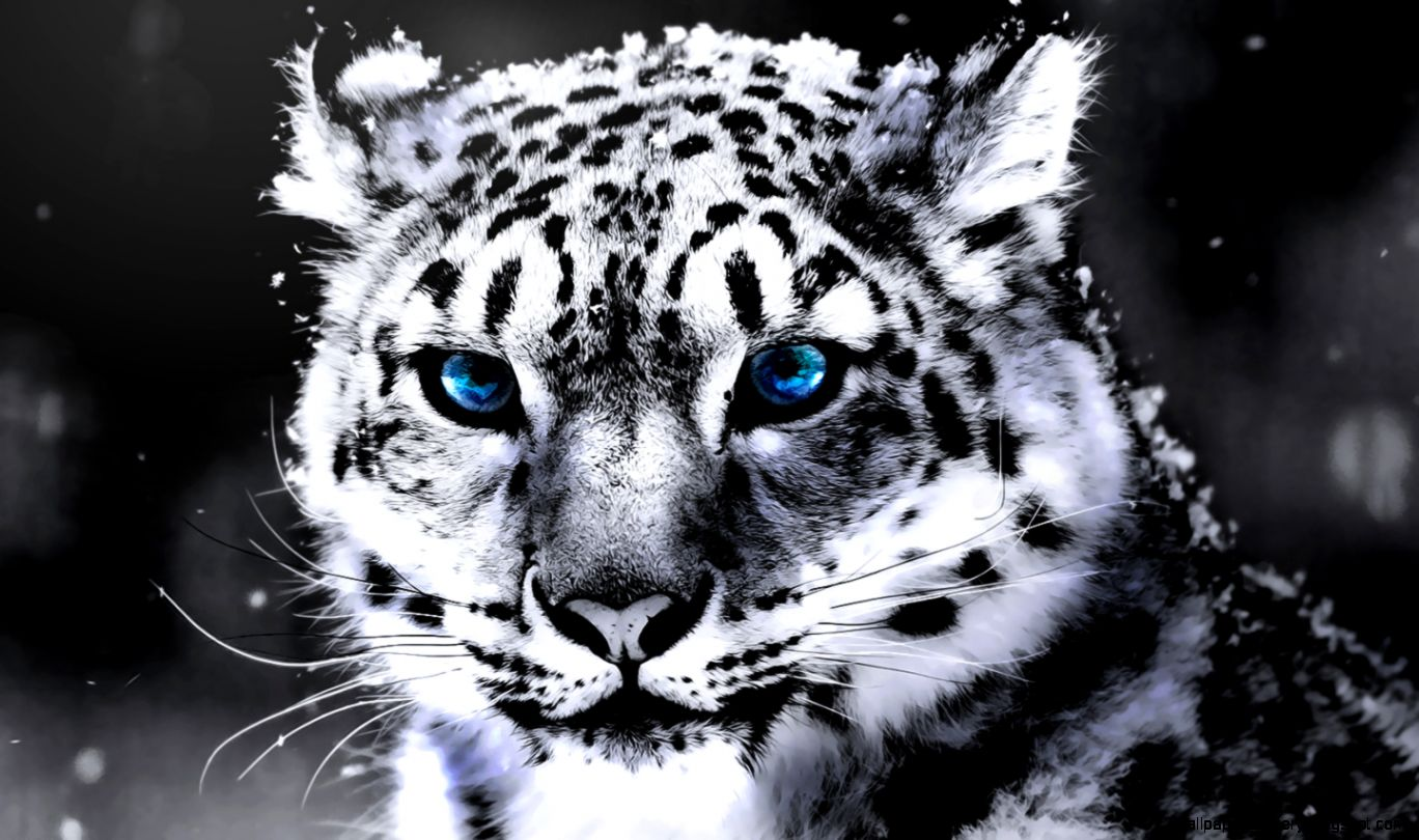 View Original Size White Tiger With Blue Eyes Wallpaper 3D Amazing Wallpapers