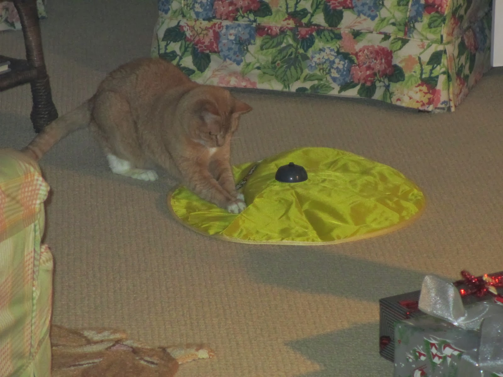 Mr. Fur's BIG Gift from Santa!