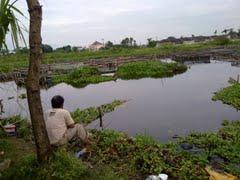 Tempat Mancing Gratis Ikan Jambal Gede