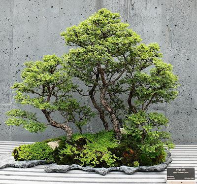 bonsai saikei
