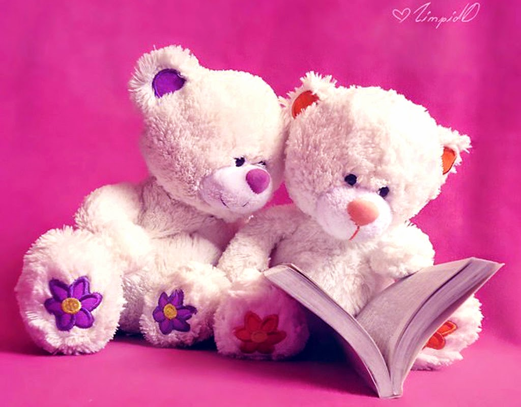 Lovely Teddy Bear Couple Reading Book HD Wallpaper