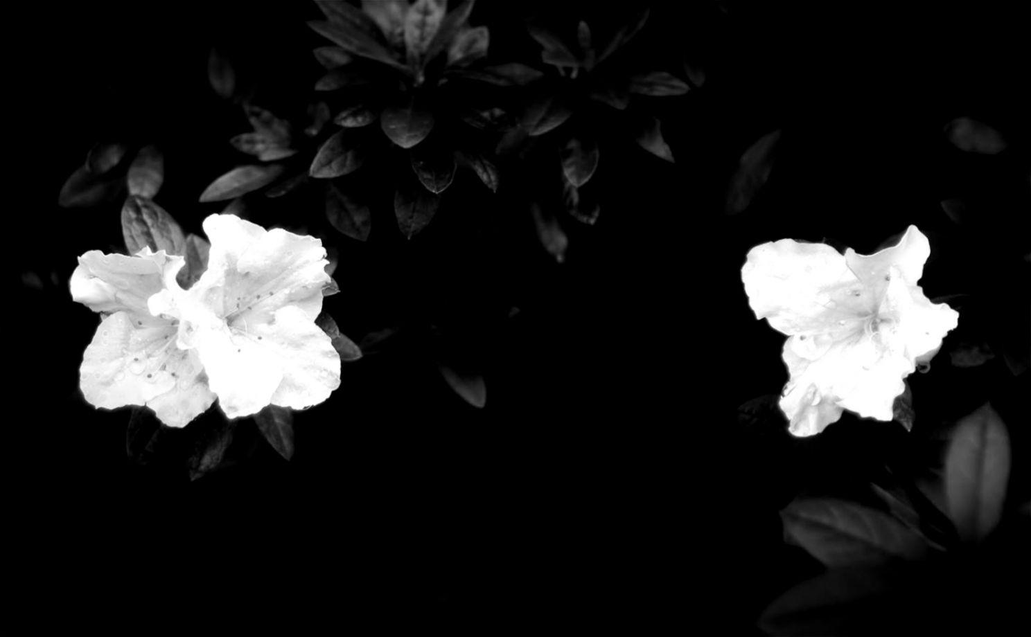 Flowers Black Background 6989700