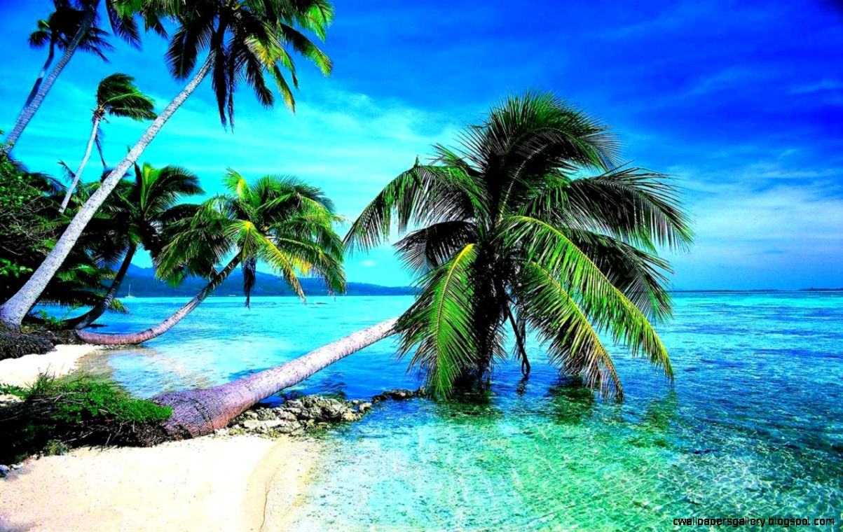 Tropical Beach Landscape Wallpaper HD Best Collection