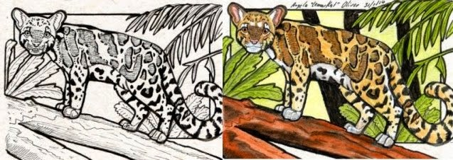 illustration colouring process, before and after