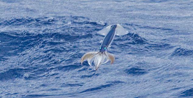 And i think to myself what a wonderful world mollusc for Where do flying fish live