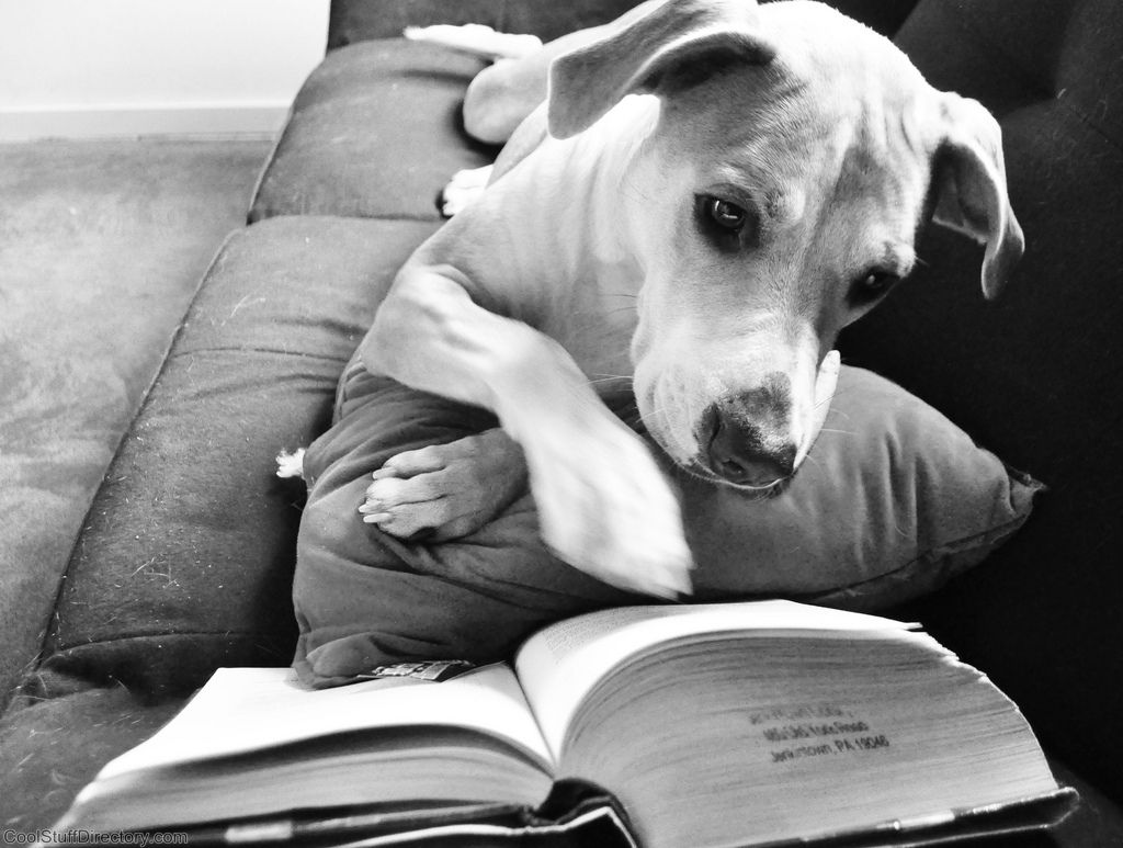 19. Mia the Reading Dog by Madeline Giscombe