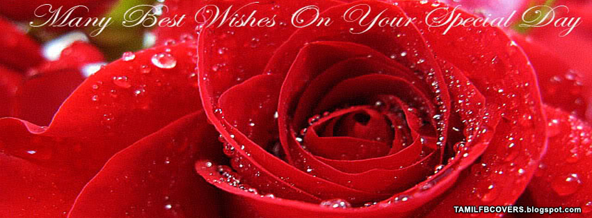 Red Rose Birthday Wishes