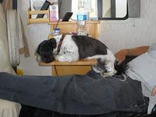 Sammy taking a nap