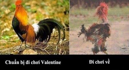 Tải Ảnh chế ngày Valentine hài hước bựa nhất