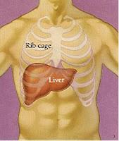 Mengenali Gejala Liver Dan Cara Mengatasinya