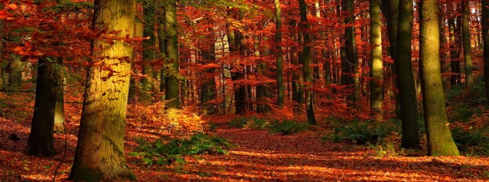 Sonbahar Kapak Resimleri