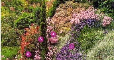 le jardin de sylvie en photos comment composer un massif de vivaces sur un talus. Black Bedroom Furniture Sets. Home Design Ideas