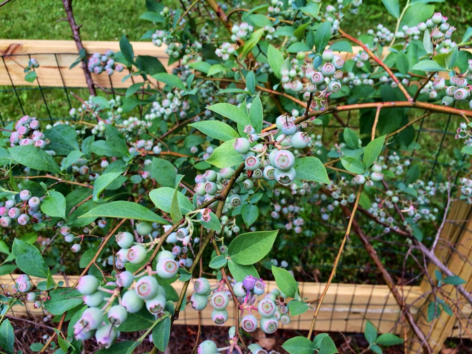 Kitchen Gardeners International Dunwoody School Daze Chesnuts Certified Wildlife Habitat Garden