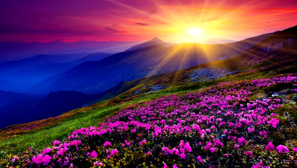 View Original Size 1680x1050 Mountains Azalea Sunset Wallpaper
