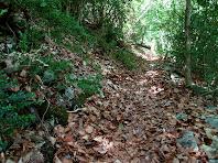 El camí de l'Artigassa, encatifat de fulles de faig, a prop del Cap dels Banyadors
