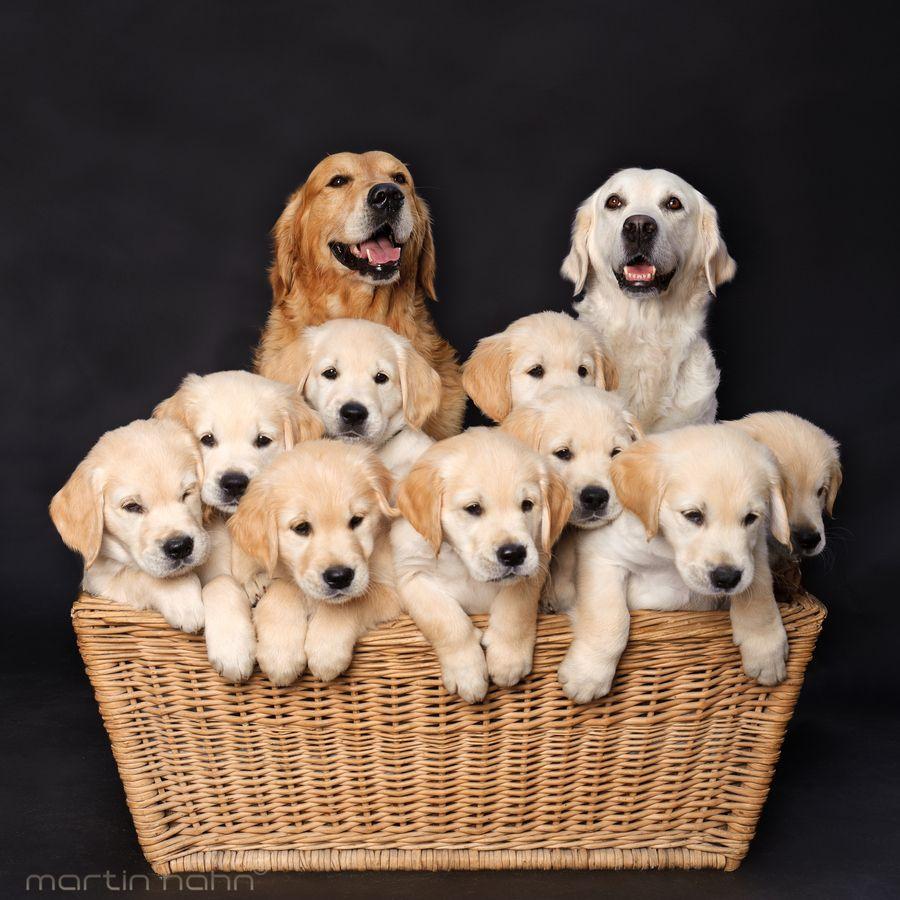 1. Dog Family by Martin Hahn