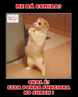 gatos engra%C3%A7ado facebook Fotos engraçadas para postar no facebook photoshop