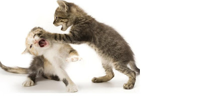 Are My kittens Fighting Or Playing? How to Tell, cats fighting,kittens in,cats food