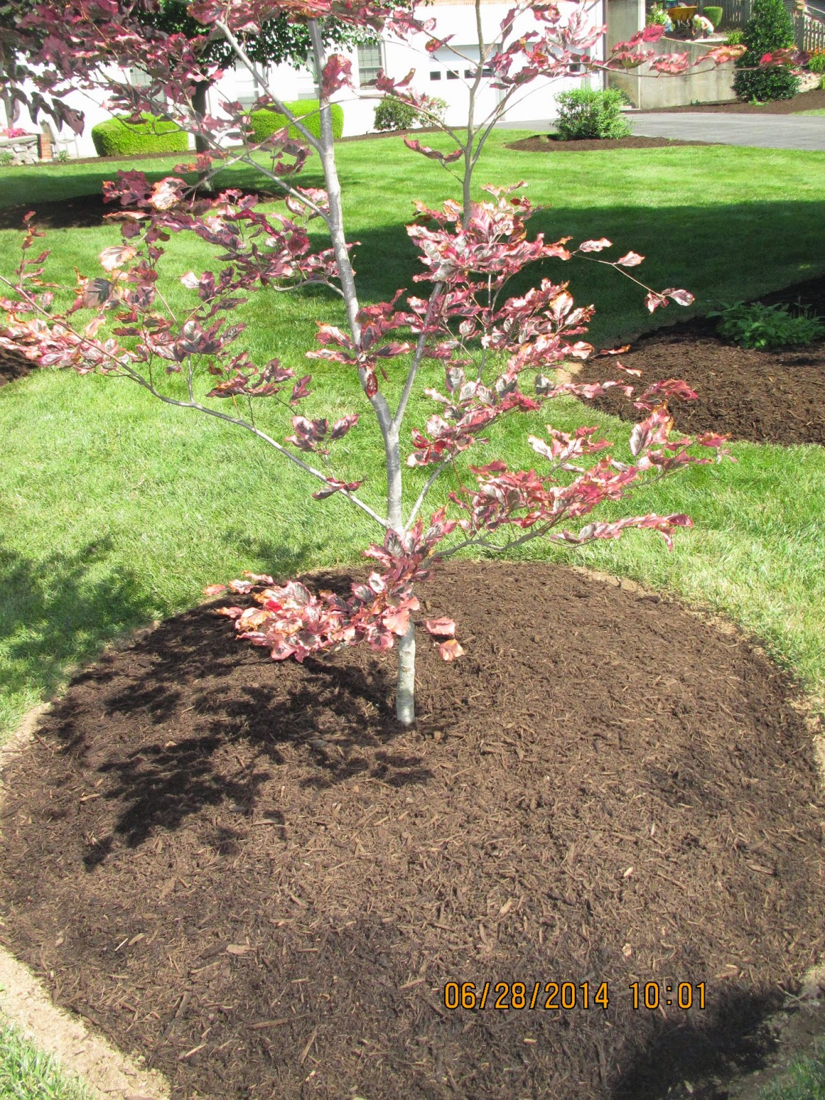Groshs Lawn Service: Plant a new tree this year in Hagerstown, MD