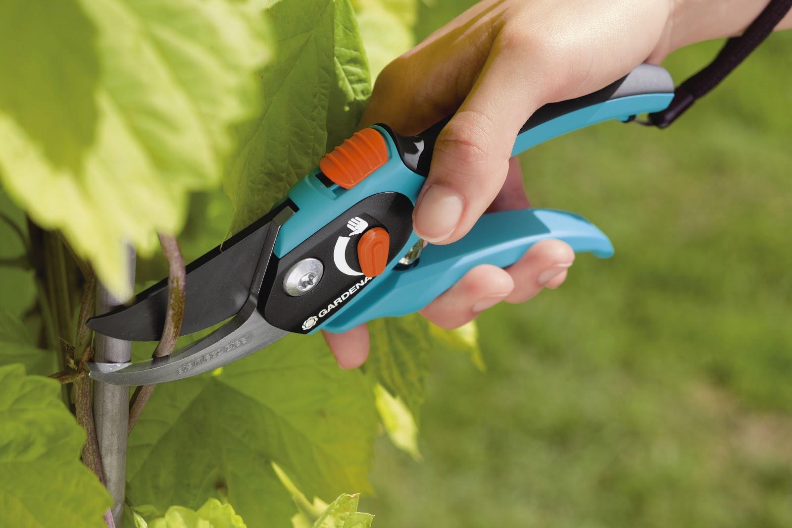 Öarnas trädgårdsplanering: månadens trädgårdspryl: sekatören
