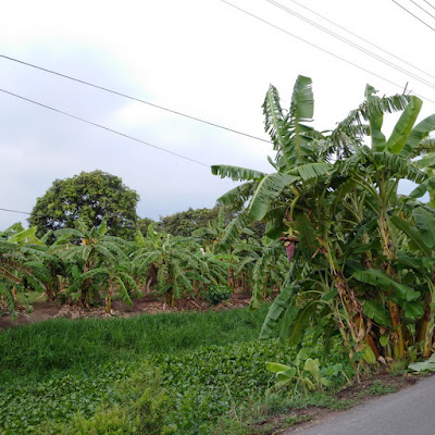 Farm Thailand