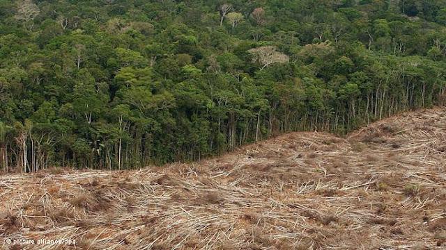 Brasil: Ambientalistas elogiam Bolsa Verde, mas apontam falhas no programa