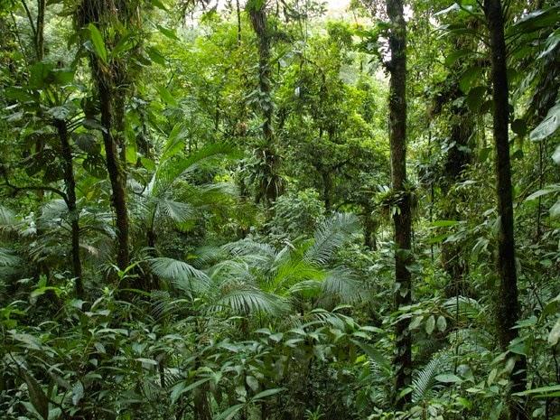 Espécies de floresta nativas da Mata Atlântica brasileira (Foto: Divulgação/Pedro Jordano/Science)