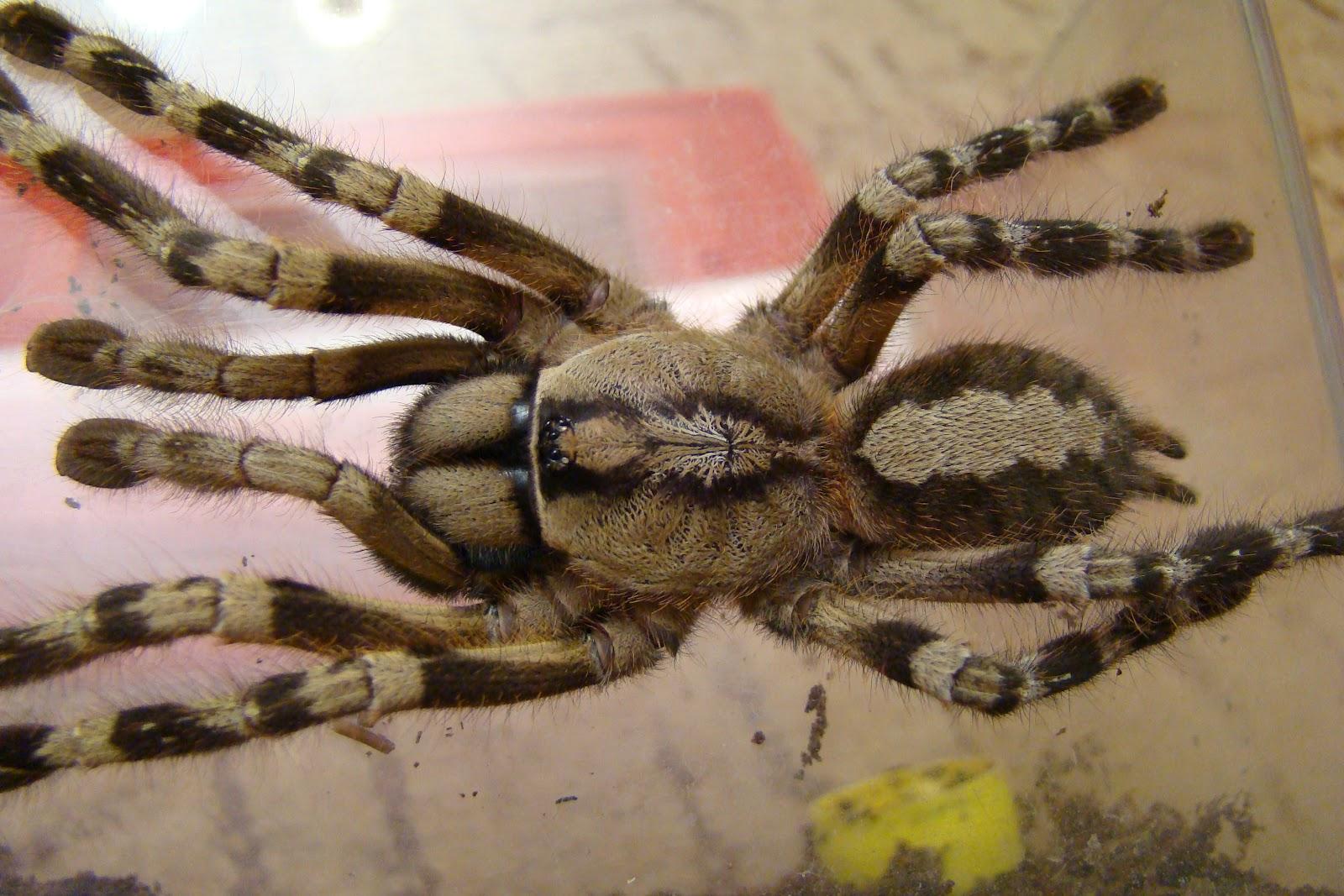 Знакомство с пауками
