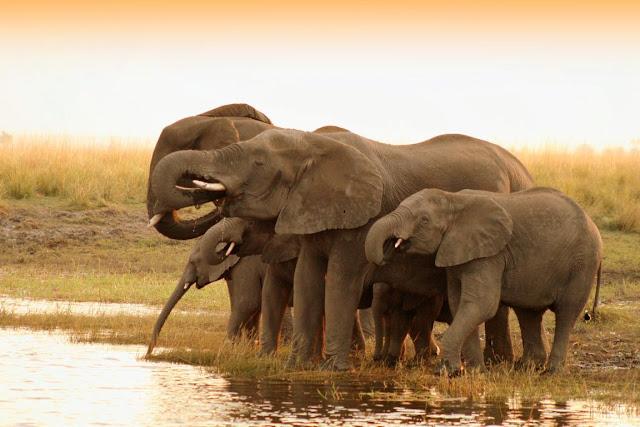 20 beautiful photos of animals, animal photos, beautiful animals, animal wallpapers