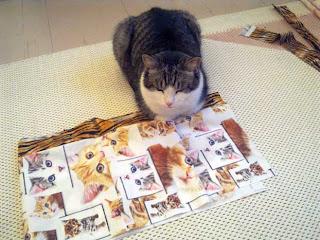 Söpö kissa tilkkukankaiden päällä