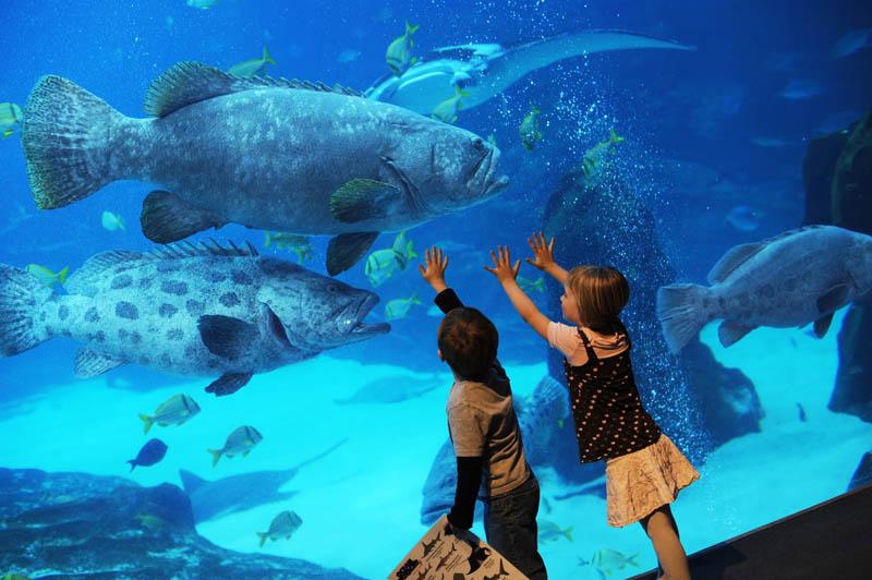 Cool Animals Pictures Georgia Aquarium Largest Aquarium