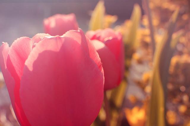 photos-photographies-printemps-jardin