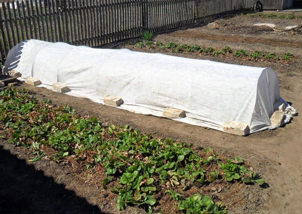 03.05. Грядка безрассадных помидоров и капусты готова. Теперь можно ждать всходов.