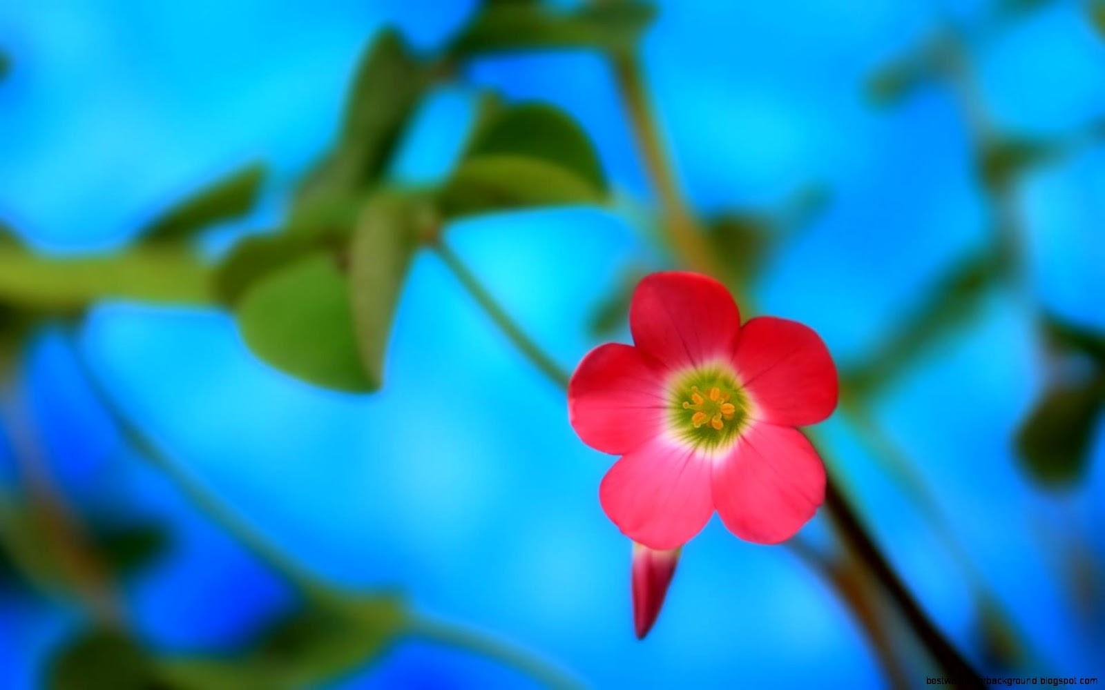 Spring flowers screensavers wallpaper best wallpaper background view original size flower free spring screensavers mightylinksfo