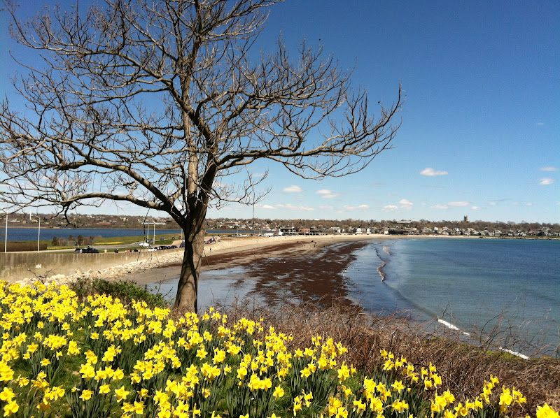 dan cirucci beautiful newport rhode island blossoms in spring