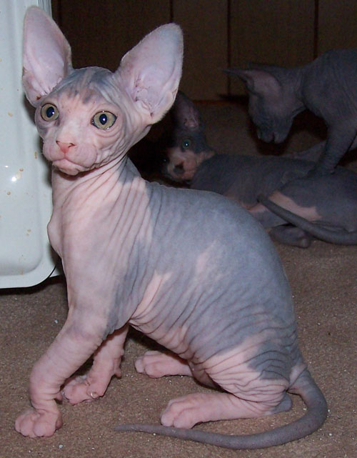 cat costume kid