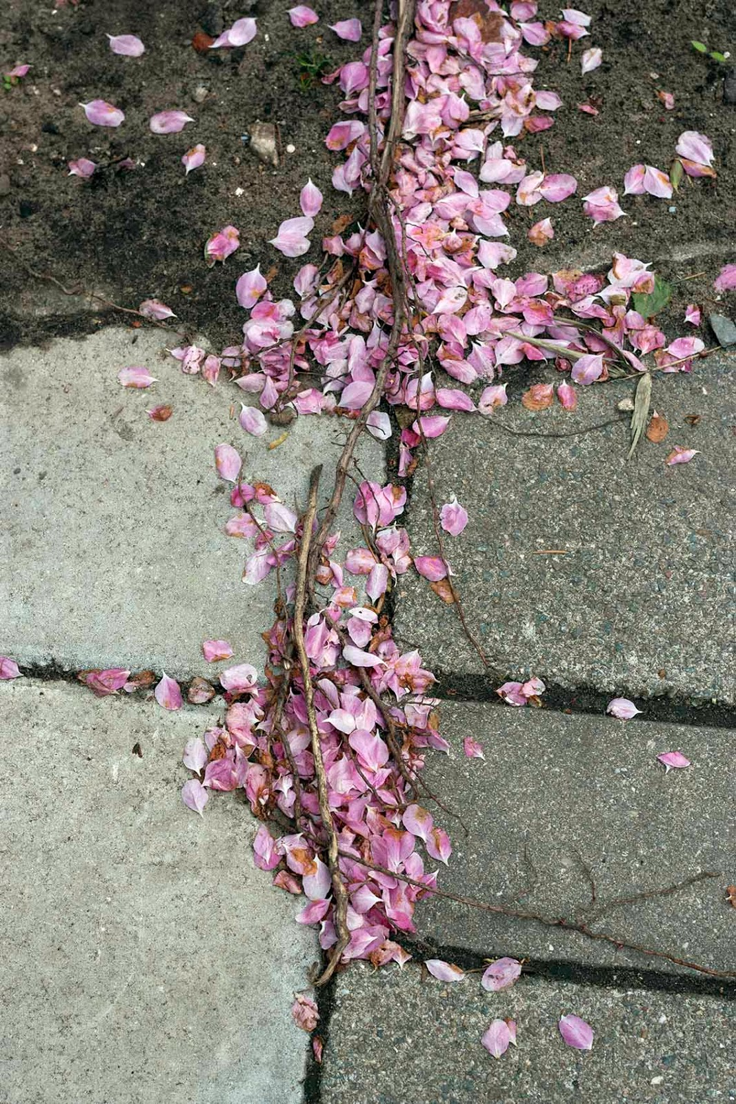 roze bloesemblaadjes met stoep en aarde