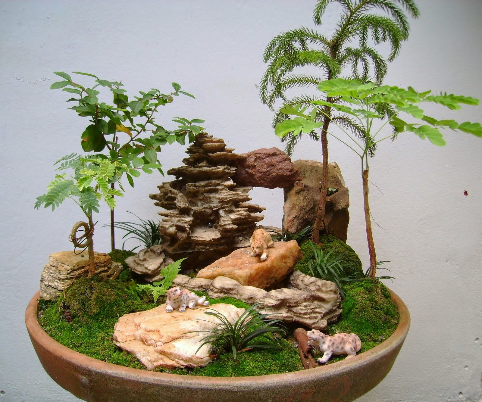 Micro grama scleranthus uniflorus - Como cuidar bonsais ...