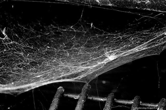pajęczyna, pająk, ogród, wiosna